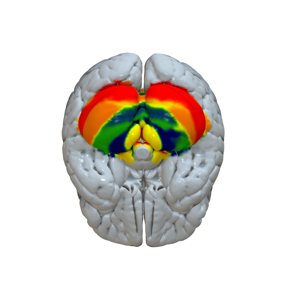 Cortical Atlas Parcellations (MNI-Space) – Lead-DBS