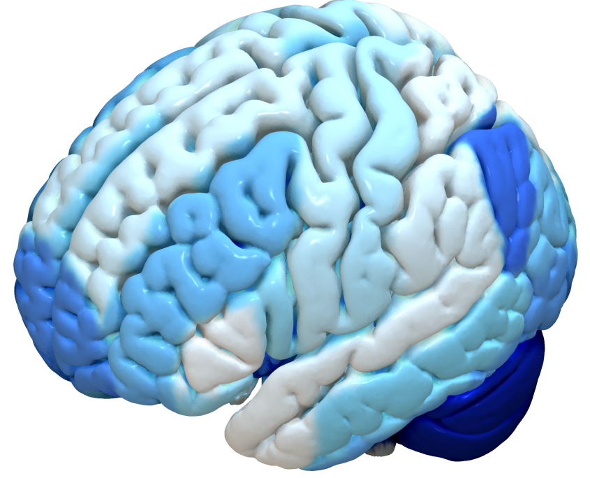 Cortical Atlas Parcellations Mni Space Lead Dbs